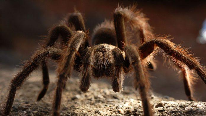 netflix-deadliest-animals