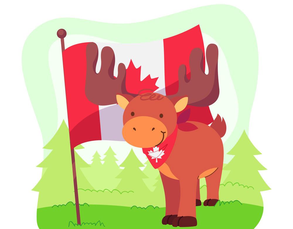 Kanada tjur star pa grasmatta med en flagga