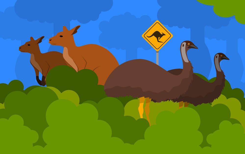 Wallabys och kangurur i australien
